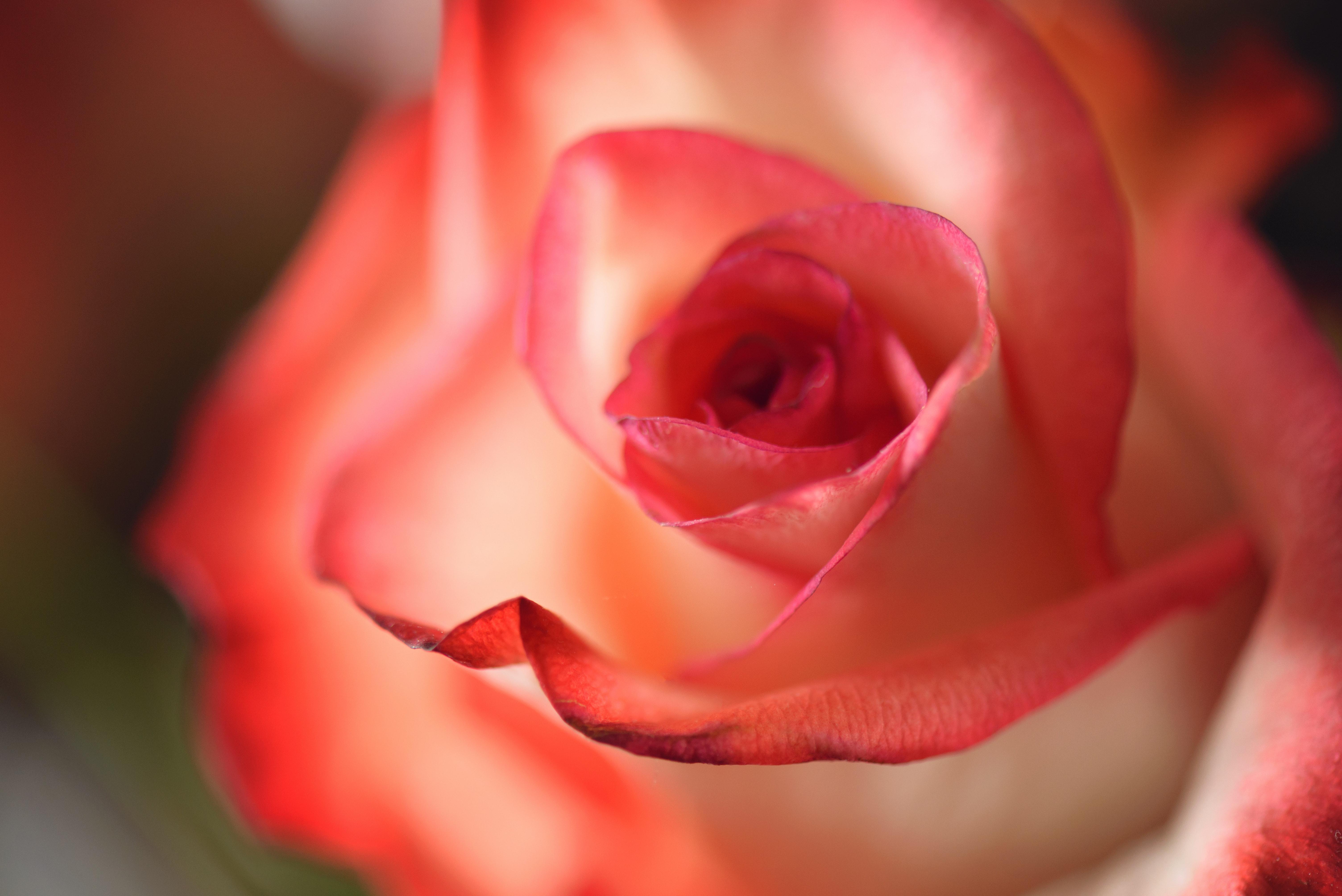 affection-anniversary-beautiful-633813