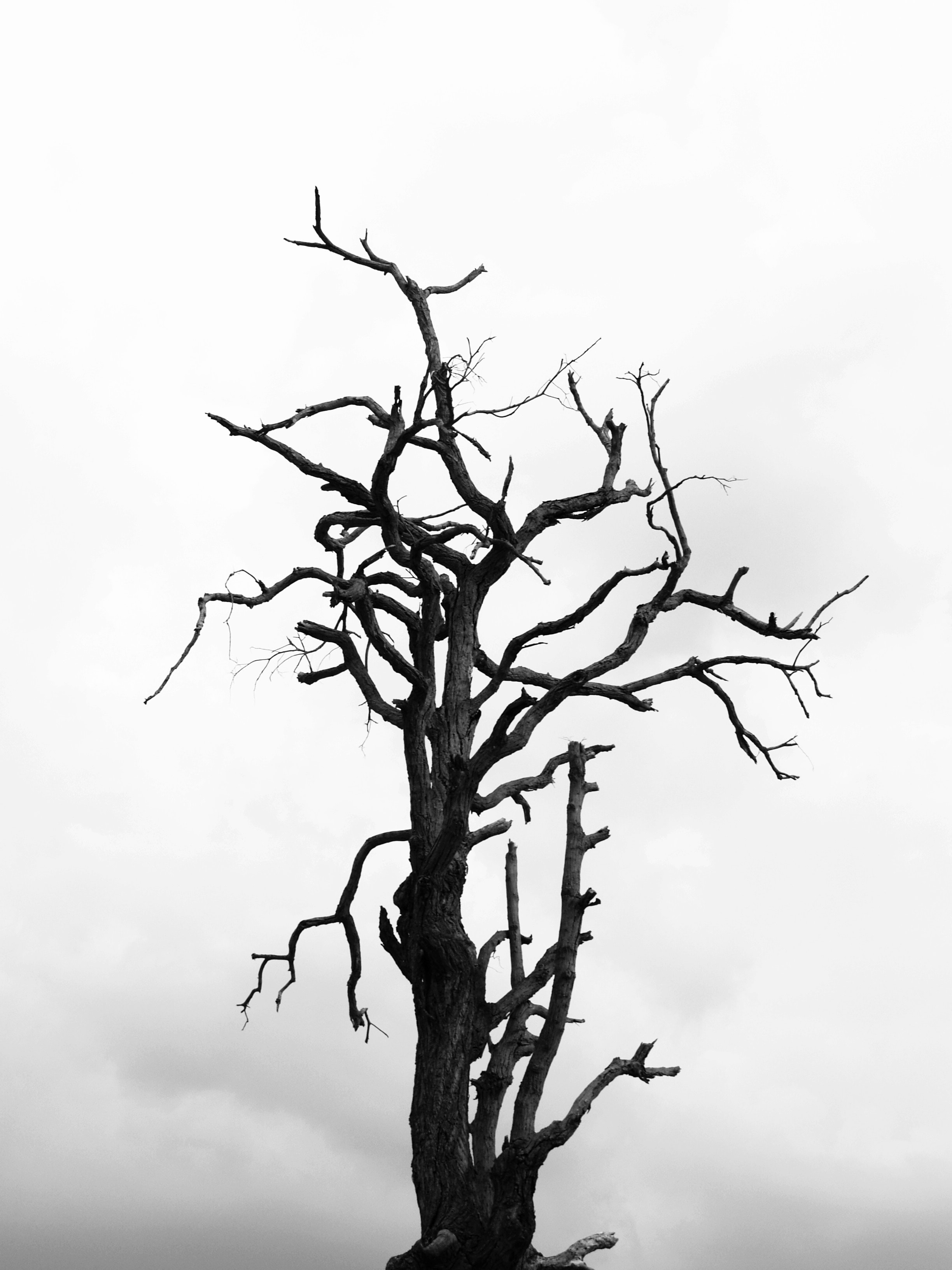 black-and-white-black-and-white-branches-cloudy-216695