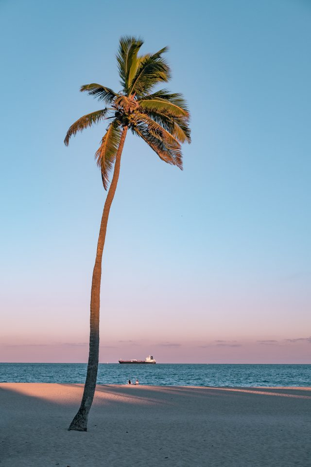 photo-of-coconut-tree-on-seashore-1576955