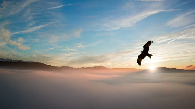 silhouette-of-bird-above-clouds-755385.jpg