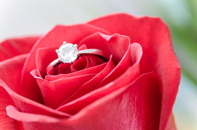 silver-diamond-embed-ring-on-red-rose-633857.jpg